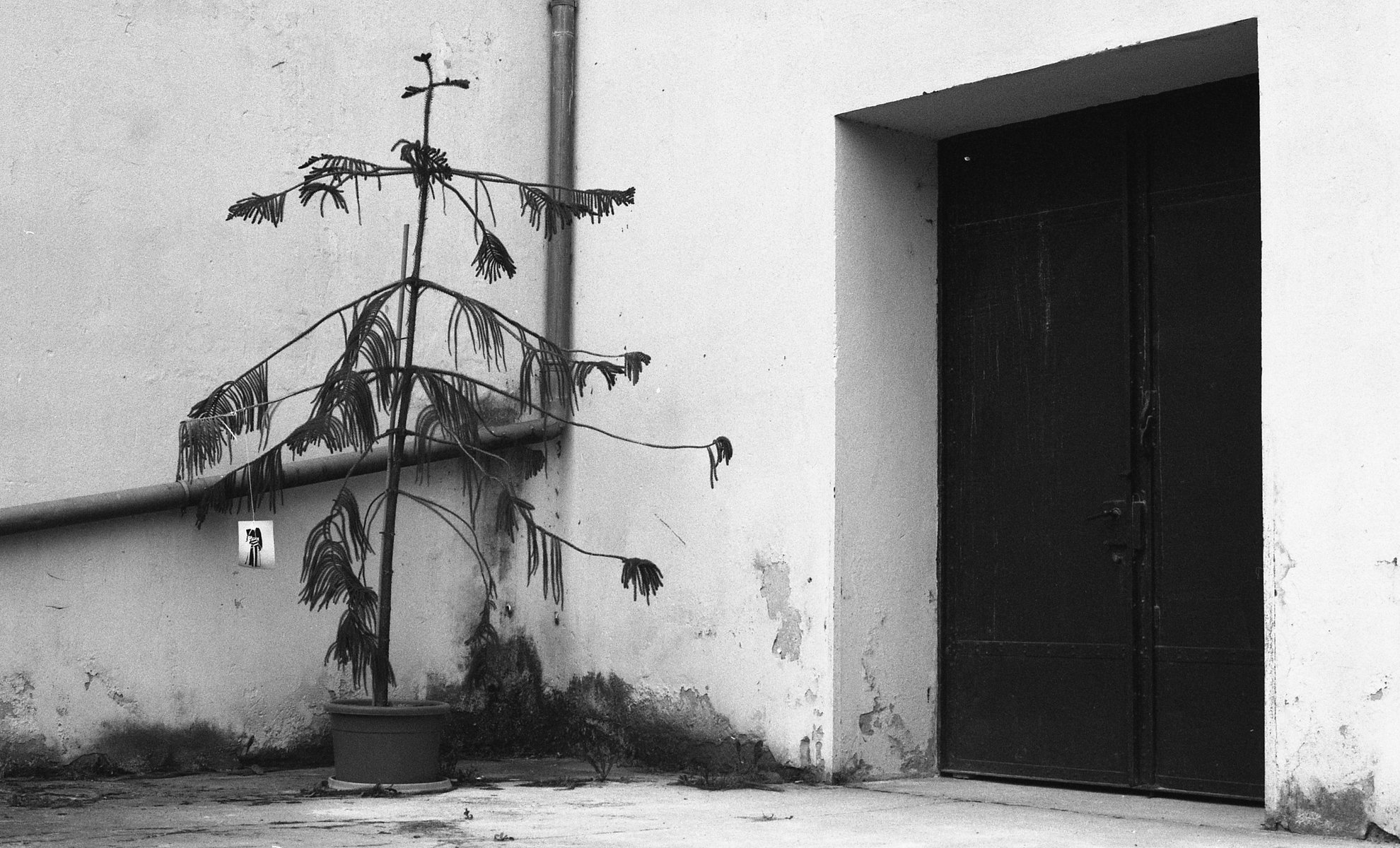 Jean-Pierre Damen urban and street photography - corner plant
